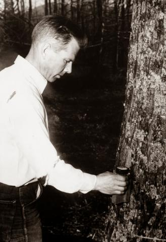 Dr. James Wallace Marvin Collecting Sample of Maple Sap