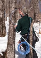spring-sugaring-maple-tree-tapping